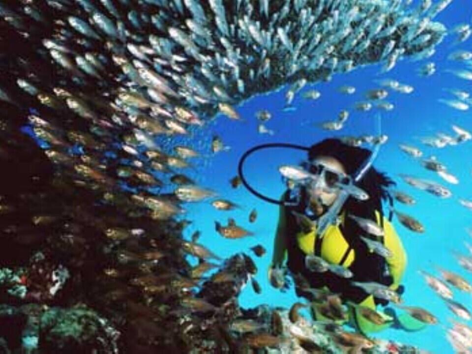 Nardymas prie Didžiojo Barjerinio rifo Australijoje