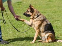 Šunų dresūros pamokos