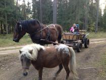 Pasivažinėjimas arklio kinkiniu